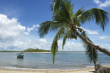 Brazil Beach Palm Tree Nordeste Bahia