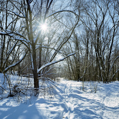Sun shines through the branches in the winter forest
