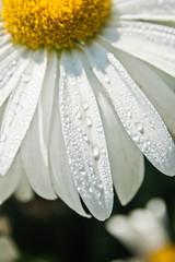 сочный цветок
