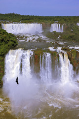 Waterfalls and birds. Brazil