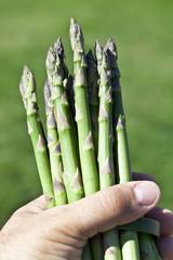Asparagus in man hand.