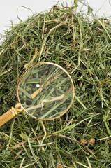 Eine Stecknadel wird mit einer Lupe im Heuhaufen gefunden