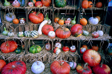 Variety of pumpkin on a shelf