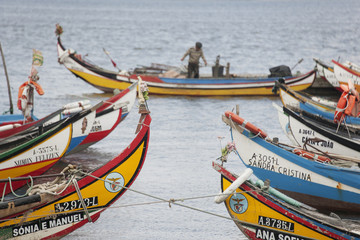 Traditional moliceiros fishing boats with high prows, painted in vivid colours, moored offshore at Torreira.