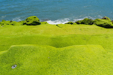 Moss covered stairs to ocean