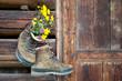 Leinwandbild Motiv Wanderschuhe an rustikaler Holzwand