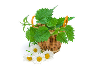 nettles in a basket and daisy flowers on a white background