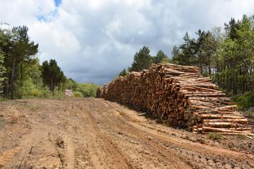 montaña de madera apilada en el bosque