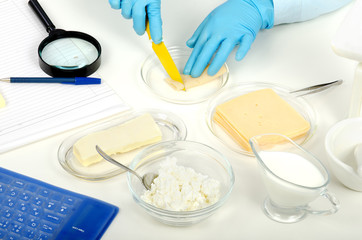 Cutting a cheese in phytocontrol laboratory