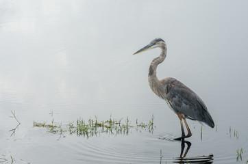 Egret in Still Water