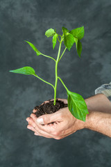 Hands holding a plant growing