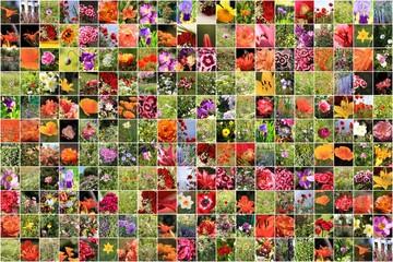 collage de nombreuses photographies de fleurs