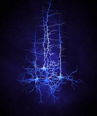 Neuron cells