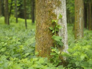 Zur Ruhe kommen im Wald