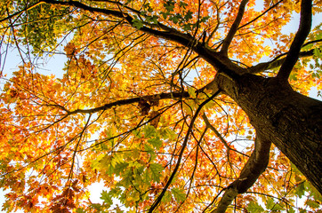 Baumkrone im Herbst :)