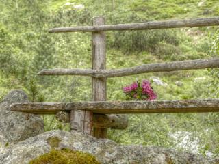 Alpenrosen auf einer Holzbank in HDR