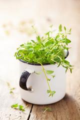 fresh thyme herb in enamel cup
