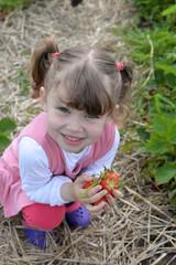 saison des fraises