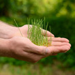 Male hands holding green growing plant over nature background. N
