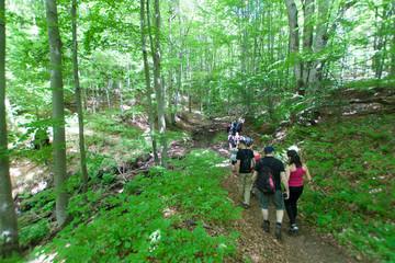Grupa turystów na leśnym szlaku