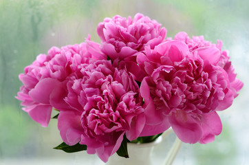 Bunch of pink peonies against rainy windows