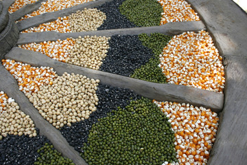 corn seeds, soybeans, sunflower and green beans