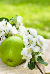Green apple with a branch of a blossoming apple-tree close-up