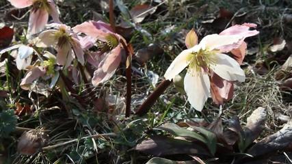 Fiore di primavera - 3