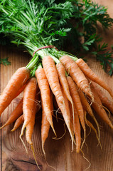Bunch of fresh carrots with green