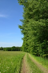 Naturlandschaft mit Weg