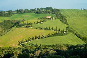 Typical curved road lined with cypress trees in Tuscany, Italy