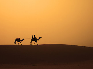 Camels walking across the sand dune