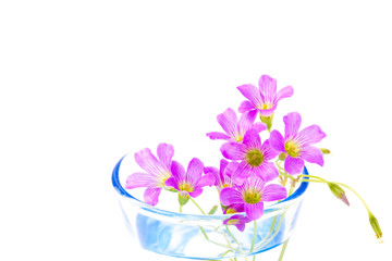 flowers of geranium that was placed in a cup