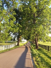 Country road among horse farms