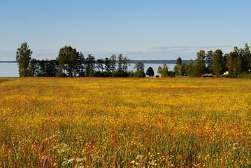 gelbe Sommerwiese am See
