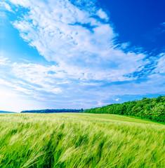 panoramic field