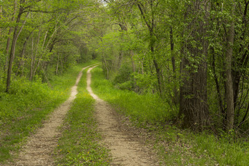 Road In Woods Spring