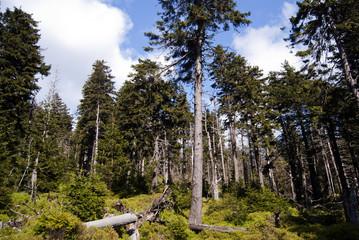 Harz Wald