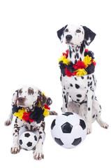 Zwei tierische Fußballfans