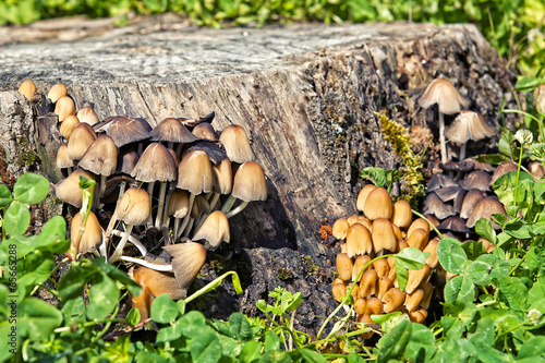 famigliola di funghi