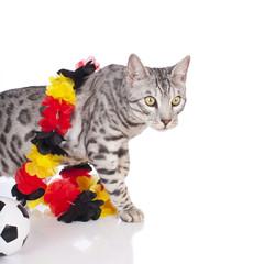 Bengalkatze im Fußballfieber