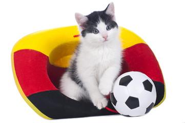 Kätzchen im Fußballfieber