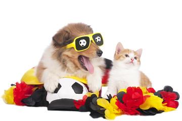Colliewelpe und Kätzchen sind Fussball Fans