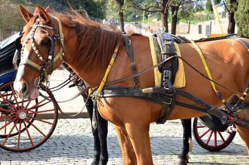 Cavallo in città