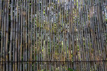 Bambus Zaun