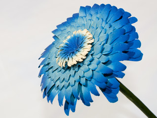 Blue wood flower