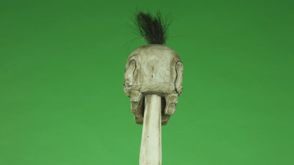 dead skull isolated on chroma green screen background