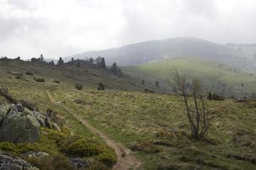 Sentier de randonnée dans les Vosges