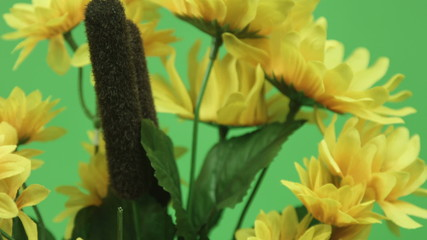 yellow flower isolated on chroma green screen background