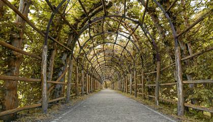Garden-Way as an arbour of hornbeam
